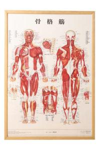 A解剖生理学2016