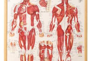 アドバンス解剖生理病理学