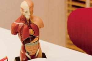 B解剖生理学2016