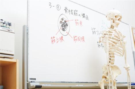 ベーシック解剖生理学